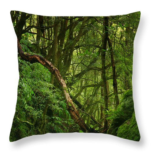 Woodland Throw Pillow featuring the photograph Forest by Gaspar Avila