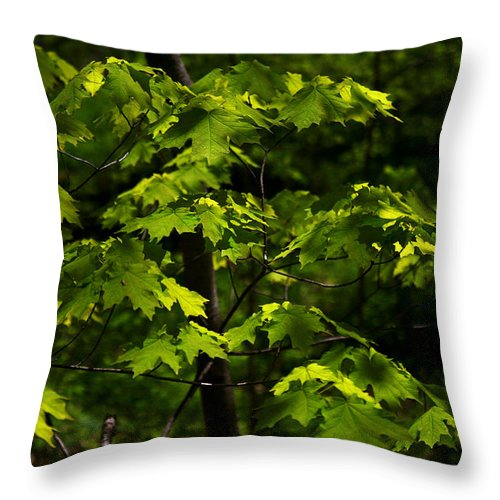 Forest Throw Pillow featuring the photograph Forest Shades by Randy Oberg