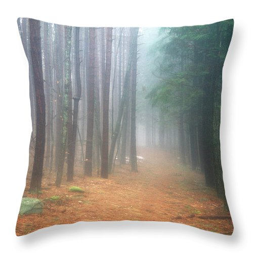 Forest Throw Pillow featuring the photograph Forest Trail Through Pines by John Burk