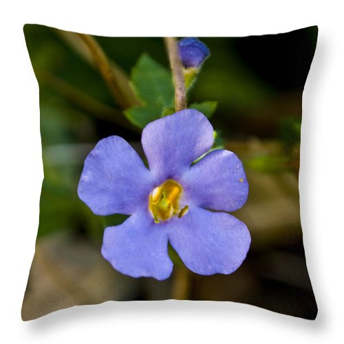 Blue Throw Pillow featuring the photograph Forget Me Not by Svetlana Sewell