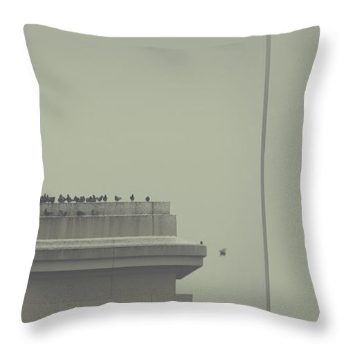 Birds Throw Pillow featuring the photograph Forgiveness by Dana DiPasquale