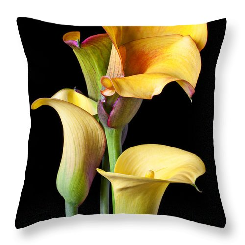 Calla Lily Throw Pillow featuring the photograph Four Calla Lilies by Garry Gay