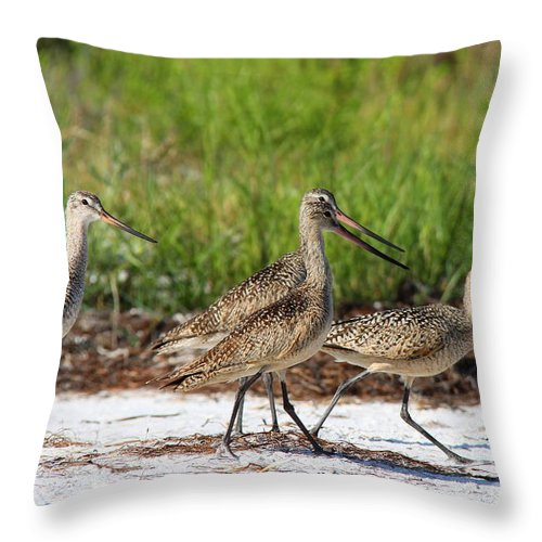 Marbled Godwit Throw Pillow featuring the photograph Four Marbled Godwits by Barbara Bowen