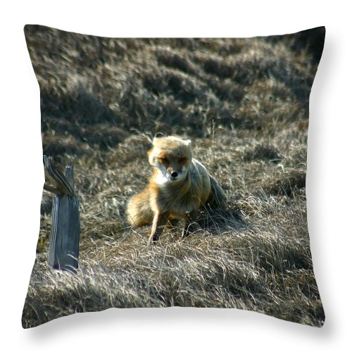 Red Fox Throw Pillow featuring the photograph Fox In The Wind by Anthony Jones