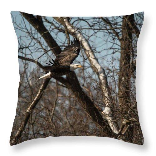 Fox River Throw Pillow featuring the photograph Fox River Eagles - 20 by David Bearden
