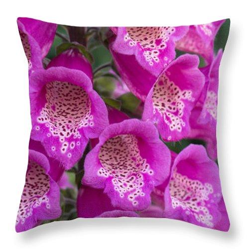 Flora Throw Pillow featuring the photograph Foxgloves 1 by Jill Greenaway