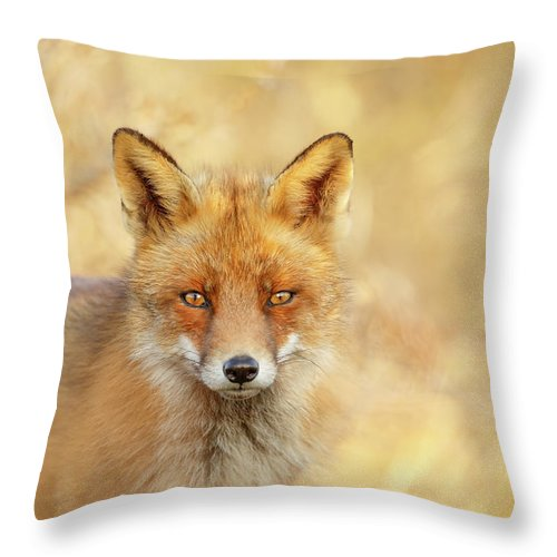 Red Fox Throw Pillow featuring the photograph Foxy Faces Series- That Look by Roeselien Raimond