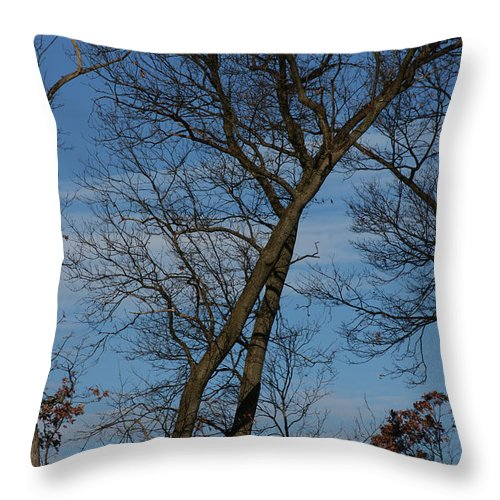 Woodland Throw Pillow featuring the photograph Framed In Oak - 2 by Linda Shafer