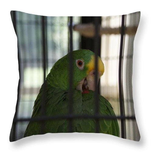 Parrot Throw Pillow featuring the photograph Framed by Shelley Jones