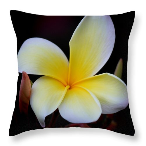 Pansy Throw Pillow featuring the photograph Frangipani Also Plumeria by Joseph G Holland