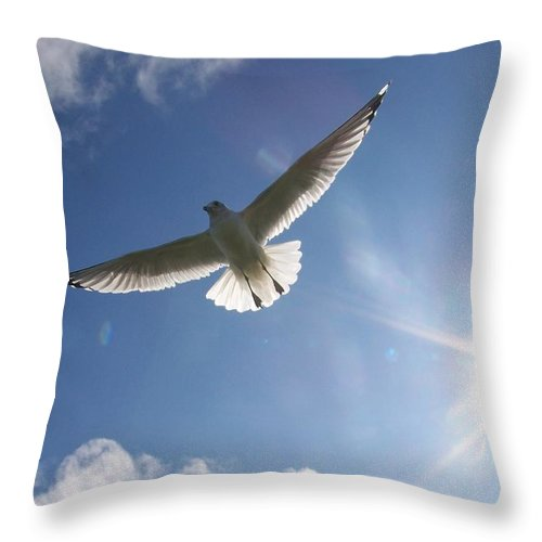 Gull Throw Pillow featuring the photograph Freedom - Photograph by Jackie Mueller-Jones