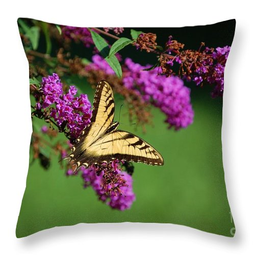 Butterfly Throw Pillow featuring the photograph Freedom by Debbi Granruth
