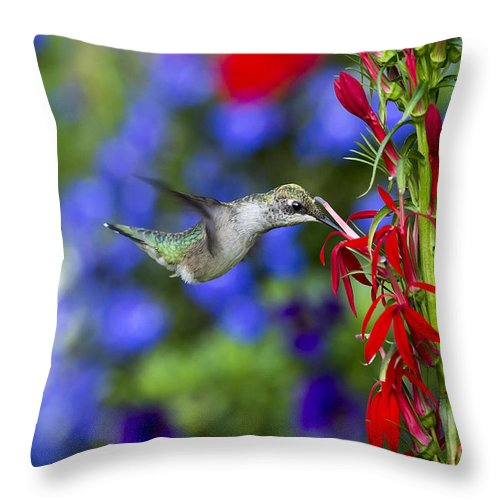 Birds Throw Pillow featuring the photograph Freedom Hummingbird by Paul Danaher