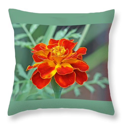 Throw Pillow featuring the photograph French Marigold by Manjeet Sabharwal