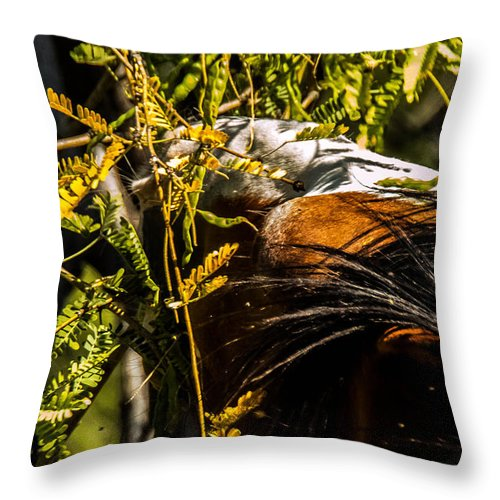 Salt River Wild Horses Throw Pillow featuring the photograph Fresh Beans by Ronald Hunt