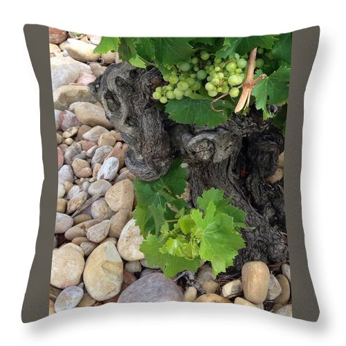 Young Healthy Grape Vines Bursting With Life Among The Rocky Soil In France Throw Pillow featuring the photograph Fresh Grapes by Sherry Canterbury Schmidt