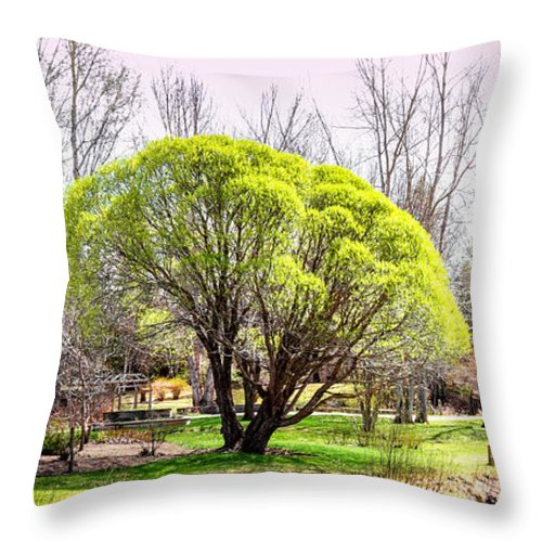 Devonian Garden Throw Pillow featuring the photograph Fresh Spring Trees by Carol Cottrell