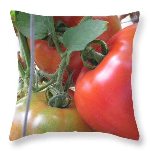 Vegetable Throw Pillow featuring the photograph Fresh Tomatoes Ahead by M E Cieplinski