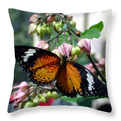 Photography Throw Pillow featuring the photograph Friends come in small packages by Shelley Jones