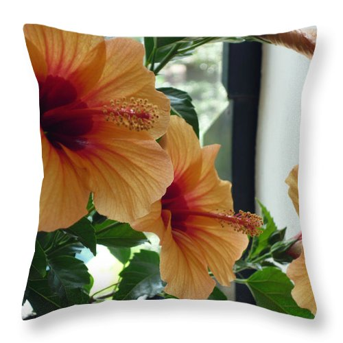 Photography Flower Floral Bloom Hibiscus Peach Throw Pillow featuring the photograph Friends For A Day by Karin Dawn Kelshall- Best
