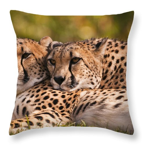 Cheetah Throw Pillow featuring the photograph Friends Forever by Chad Davis