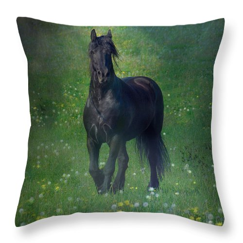 Horses Canvas Prints Throw Pillow featuring the photograph Friesian Mist by Fran J Scott