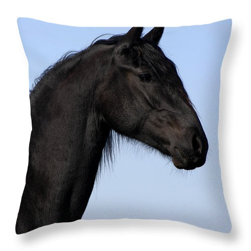 Friesian Throw Pillow featuring the photograph Friesian Stallion by Michael Mogensen