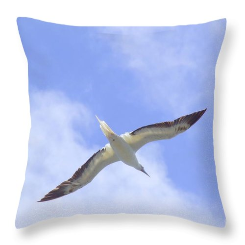Black Throw Pillow featuring the photograph Frigatebird by Mary Deal