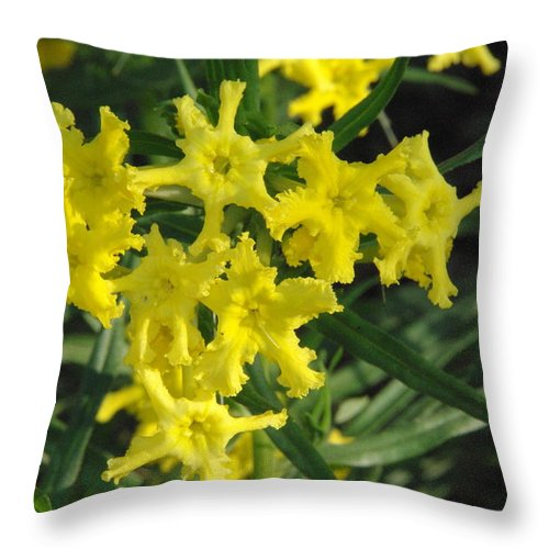 Wildflower Throw Pillow featuring the photograph Fringed Puccoon by Robyn Stacey