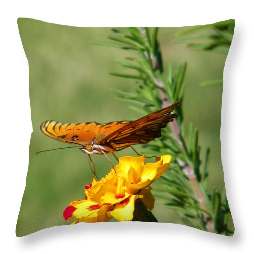 Fritillary Throw Pillow featuring the photograph Fritillary Flitterby by Gale Cochran-Smith