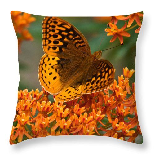 Frittalary Throw Pillow featuring the photograph Frittalary Milkweed And Life by Douglas Barnett