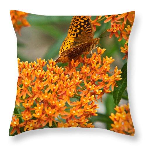 Frittalary Throw Pillow featuring the photograph Frittalary Milkweed And Nectar by Douglas Barnett