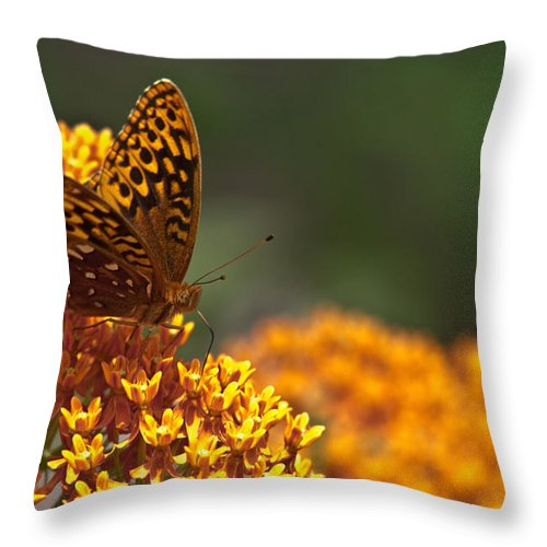 Frittalary Throw Pillow featuring the photograph Frittalary On The Prowl by Douglas Barnett