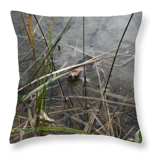 Frog Water Mother Nature Wild Reptile Eyes Lake Marsh Throw Pillow featuring the photograph Frog Home by Andrea Lawrence