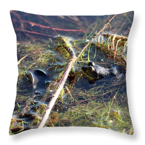 Pond Throw Pillow featuring the photograph Froggy Pond by Mary Haber