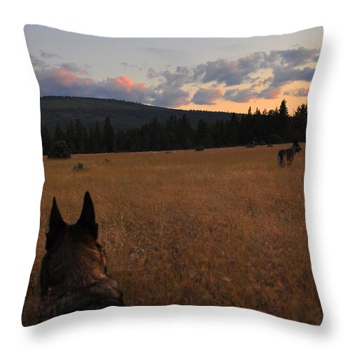 Sunset Throw Pillow featuring the photograph Frolic In The Grass by Noah Cole