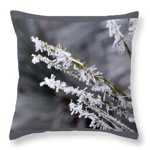 Macro Throw Pillow featuring the photograph Frost by Lauren Radke
