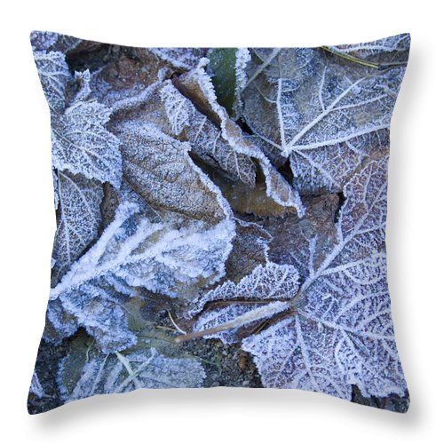 Frost Throw Pillow featuring the photograph Frost by Idaho Scenic Images Linda Lantzy