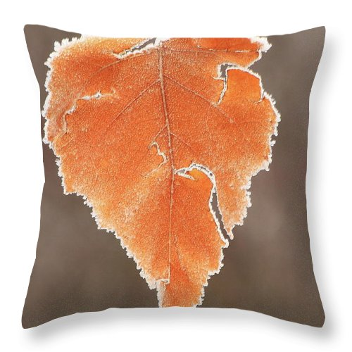 Forest Throw Pillow featuring the photograph Frosted Leaf by John Burk