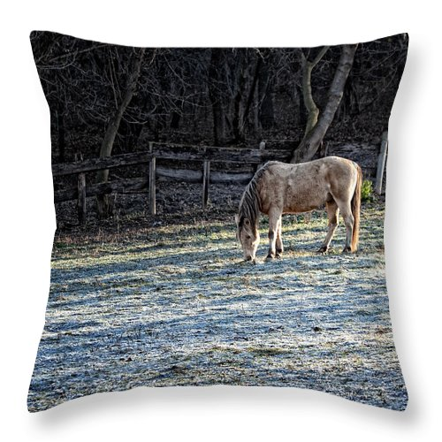 Horse Throw Pillow featuring the photograph Frosty Autumn Morning by Al Mueller