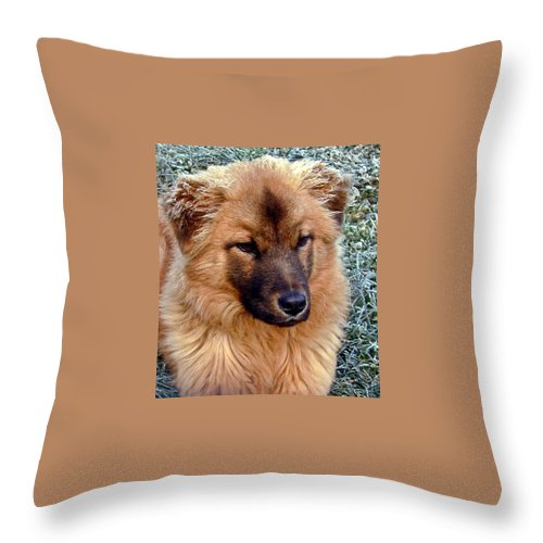 Dog Throw Pillow featuring the photograph Frosty Dog by Douglas Barnett