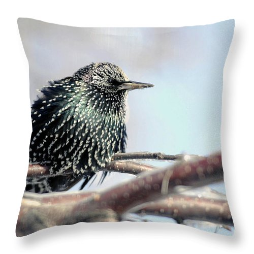 Nature Throw Pillow featuring the photograph Frozen Feathers by Alan Look