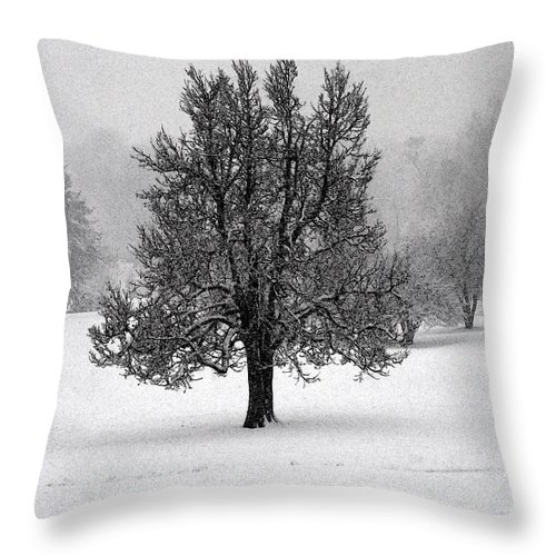 One Throw Pillow featuring the photograph Frozen One No2 by M Pace