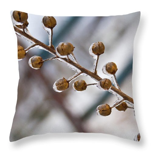 Frozen Throw Pillow featuring the photograph Frozen Seed Capsules In Time by Douglas Barnett
