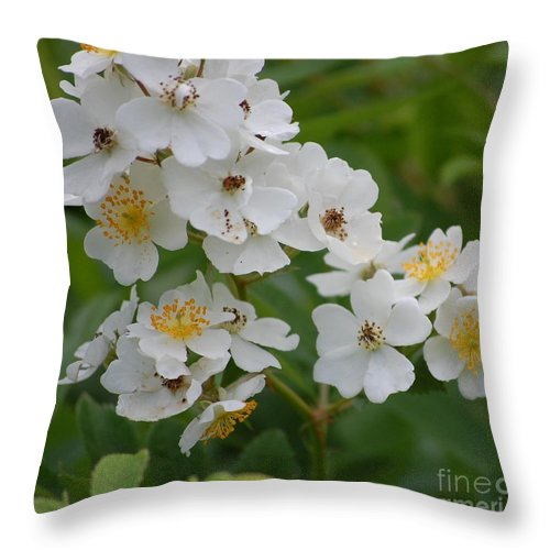 Throw Pillow featuring the photograph Fruity Potential by David Lane