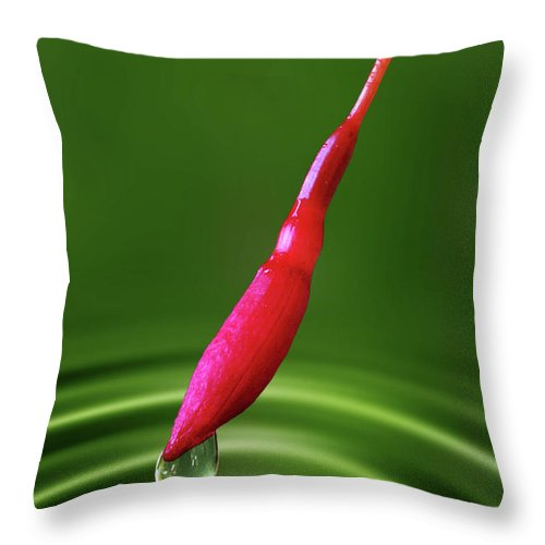 Fuchsia Magellanica Throw Pillow featuring the photograph Fuchsia Bud And Droplet by John Edwards