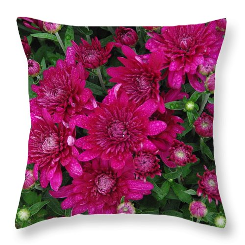 Flower Throw Pillow featuring the photograph Fuchsia Mums by Robyn Stacey