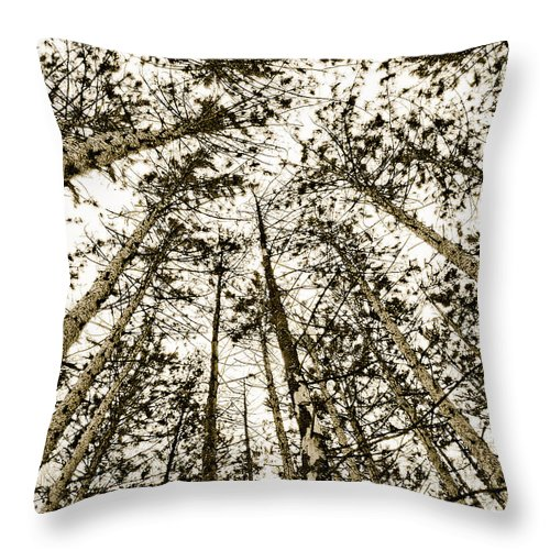 Pine Trees Throw Pillow featuring the photograph Fulfillment by Linda McRae