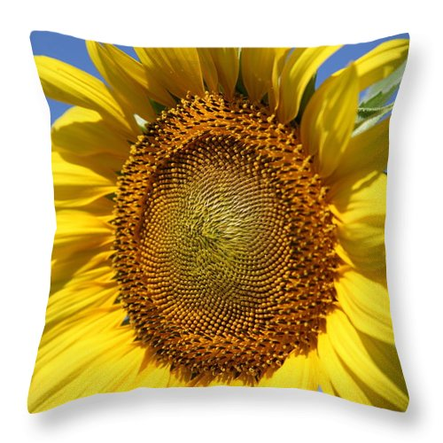 Sunflowers Throw Pillow featuring the photograph Full by Amanda Barcon