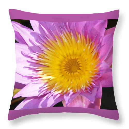Flower Throw Pillow featuring the photograph Full Bloom by David Lee Thompson